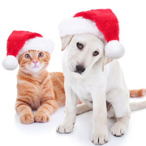 There are many great ways to help animals in need at the holiday season.